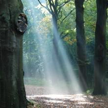 Zonnen stralen door de bos bomen